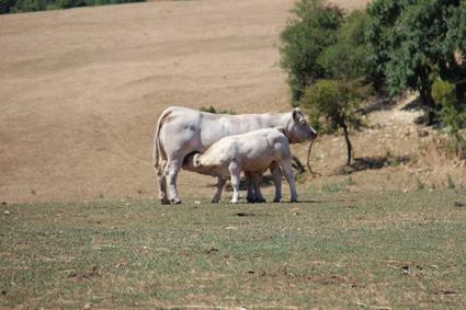 Le département au secours de l'élevage