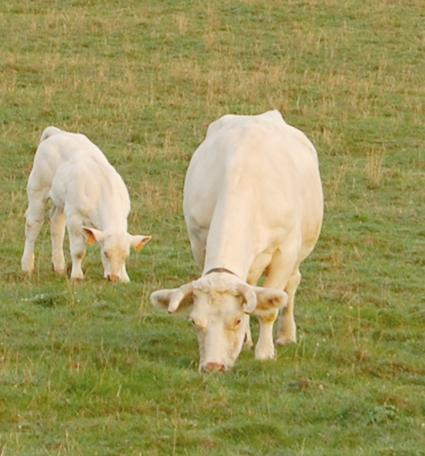 Plan de soutien à l'élevage : dossier à retourner pour le 30septembre