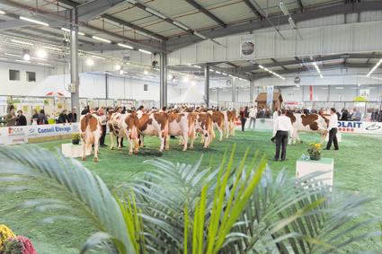 Festival de l'élevage : De retour au parc des expositions les 9 et 10 avril