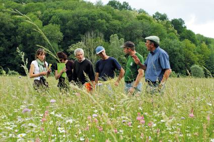 Prairies fleuries : c'est reparti