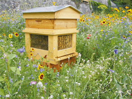 Déclaration de ruchers 2016: du nouveau au 1erseptembre