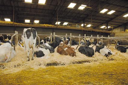 Des logettes bien aménagées pour des vaches en bonne santé
