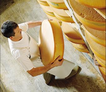 Les pistes de structuration des coopératives laitières