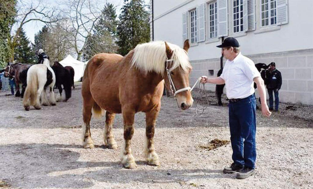 Les chevaux à l'honneur