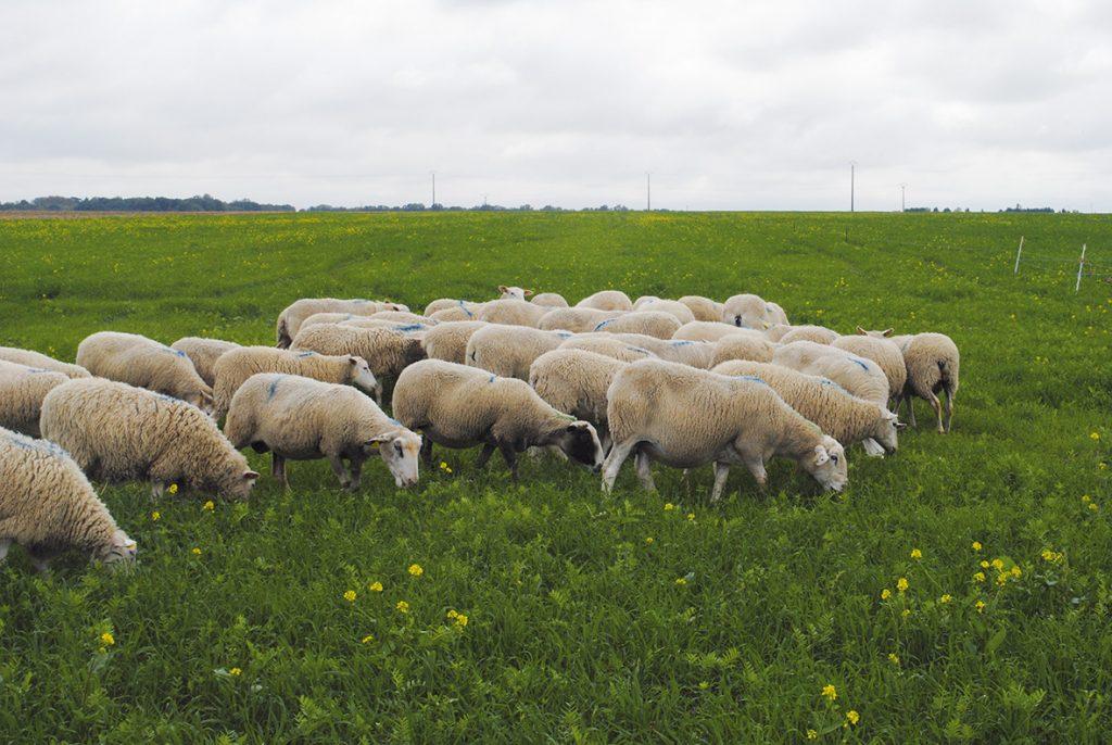 Vers de nouveaux partenariats éleveurs/céréaliers