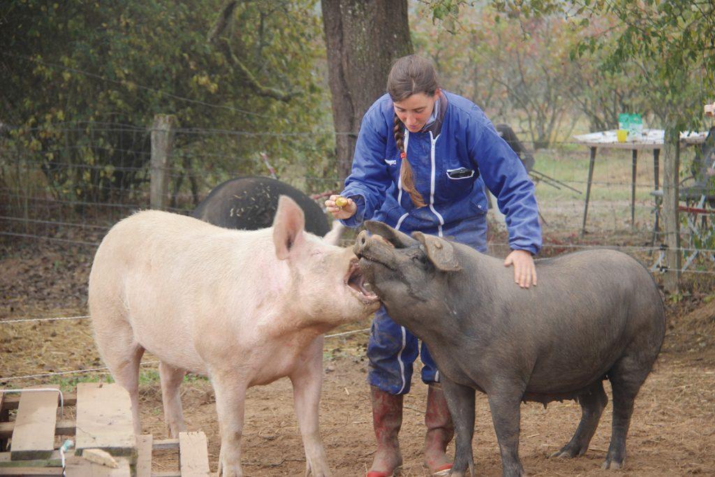 Un nouvel élevage porc plein-air