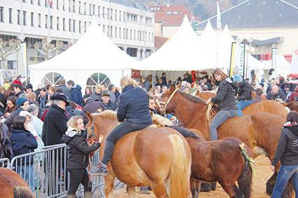 L'élevage en vedette à Vesoul