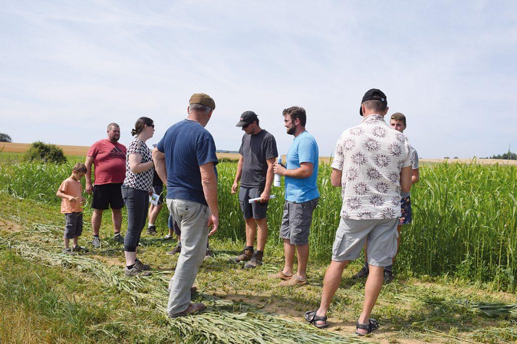Du sorgho pour pallier le manque d'herbe estival
