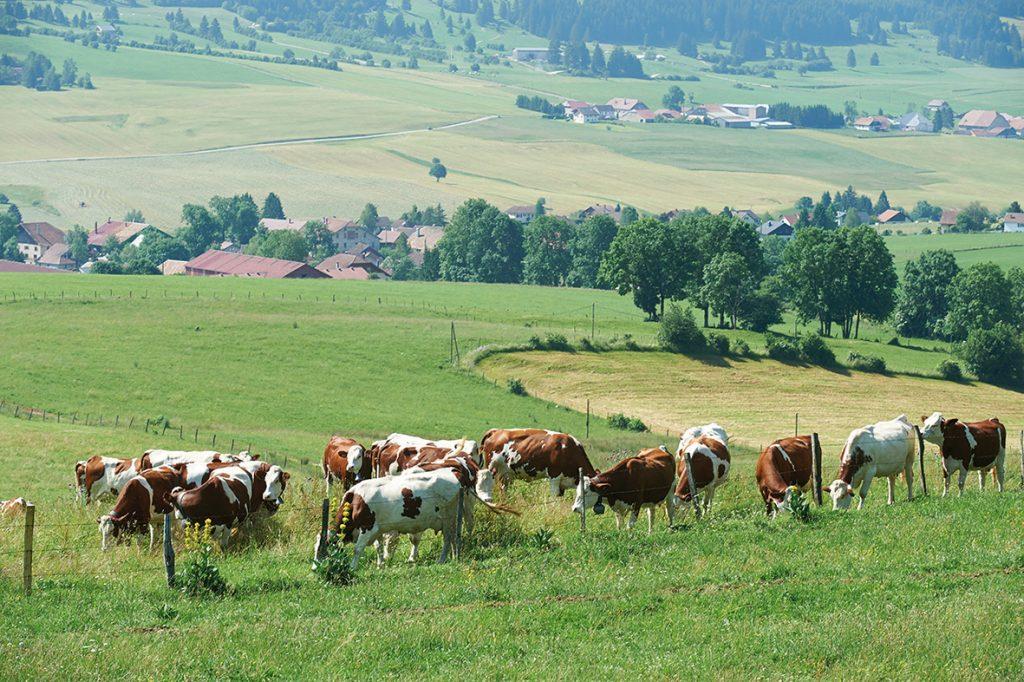 La filière laitière face à la crise
