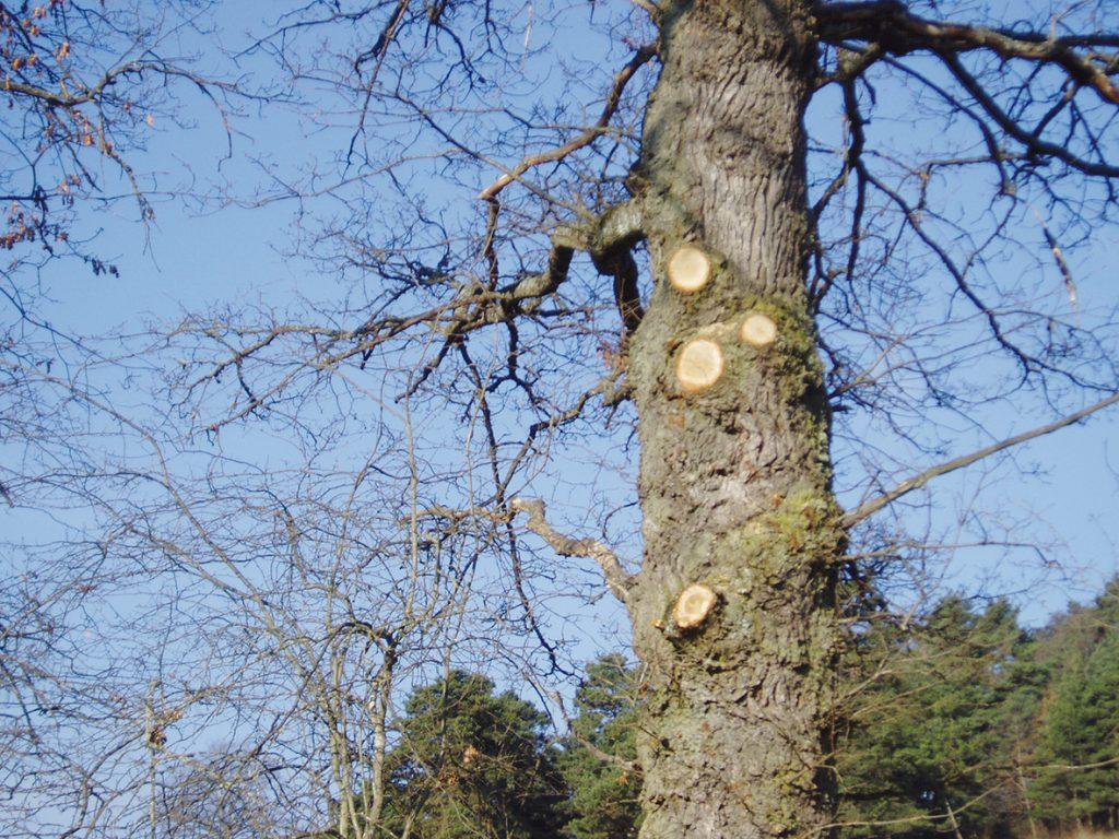 L'arbre et la brebis, l'alliance gagnante