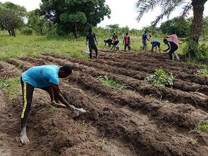 Aperçu de l'agriculture togolaise