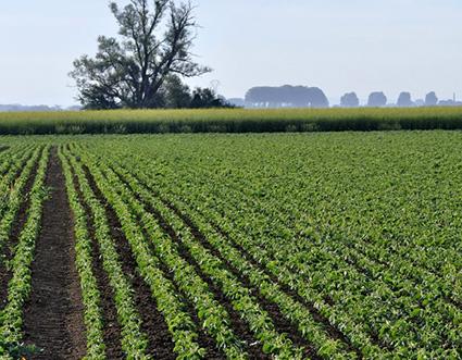 Vers une agriculture connectée à son territoire