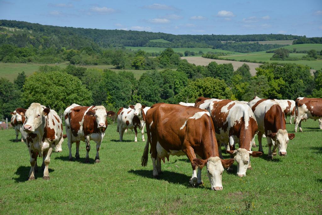 Prix du lait: l'heure du bilan 2020 et point sur le départ de 2021
