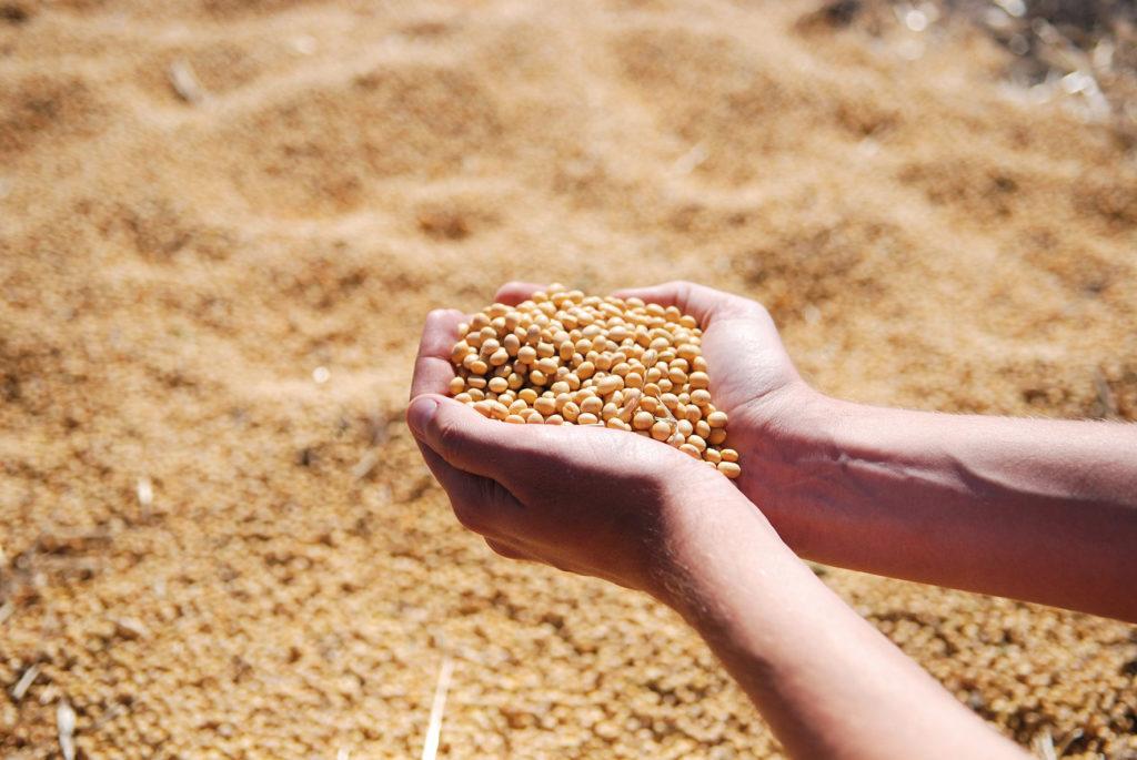 Les cours du colza et du soja flambent sur tous les marchés