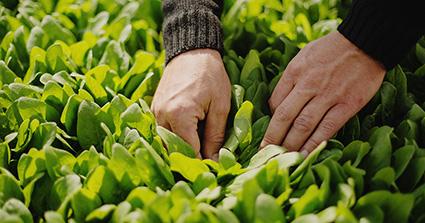 Saisonnier: Aide au frais d'hébergement