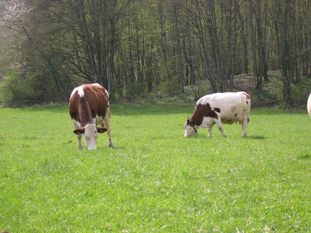 La hausse des prix du lait ne rime pas avec un meilleur revenu